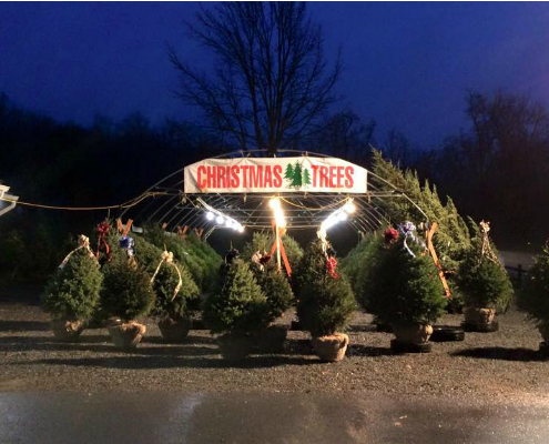 Herbeins Christmas Trees Emmaus Pa