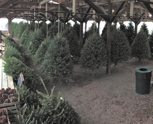 Herbeins Christmas trees