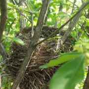 Nest in Burning Bush