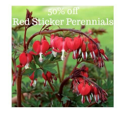 50% off red sticker perennials spring blooming plants Herbeins Garden Center Emmaus Pa