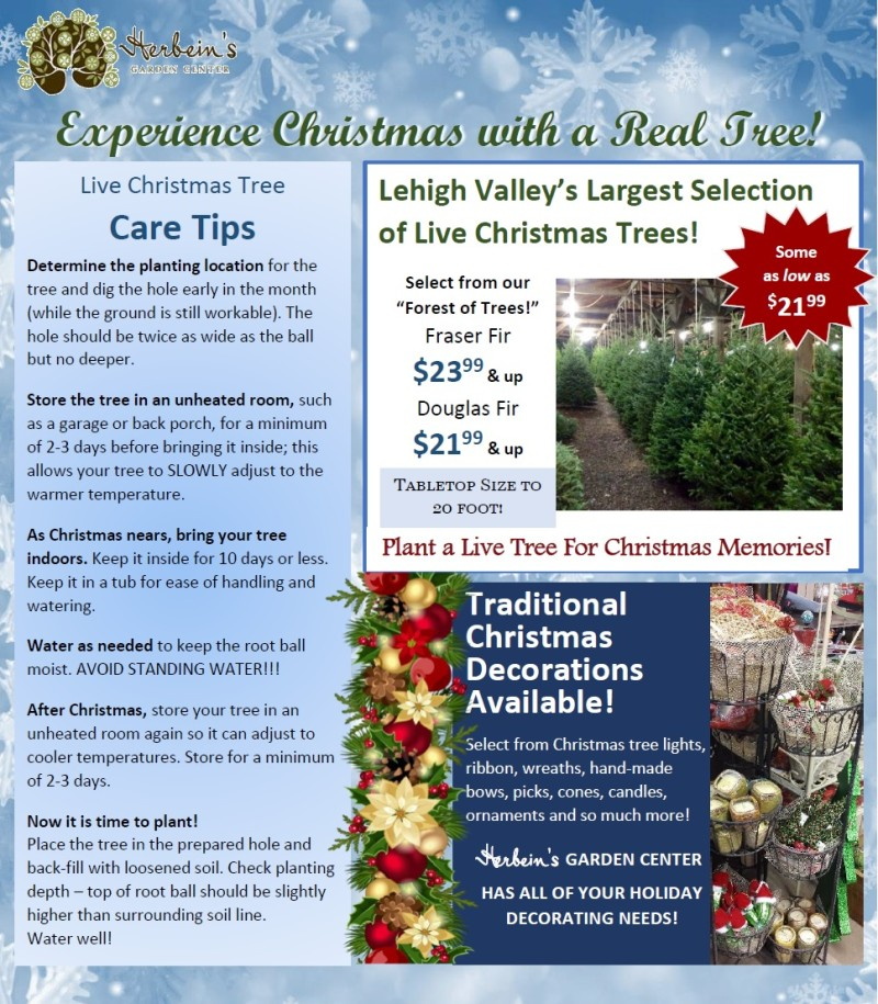 How To Take Care Of Your Christmas Trees Herbeins Garden Center Pa Lehigh Valley Nursery Landscaping