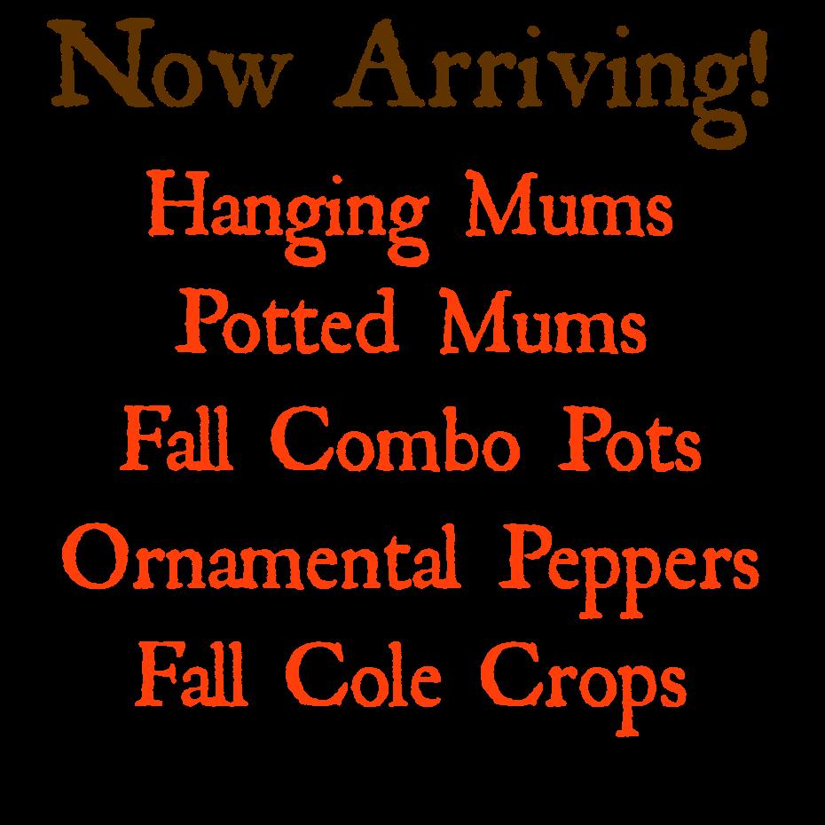 Mums Ornamental Peppers Fall Cole Crops Herbeins Garden Center Lehigh Valley Emmaus Pa