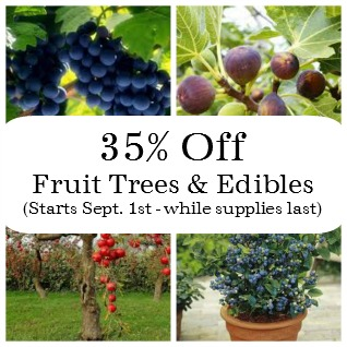 Sale September Fruit Berry Apple Peach Pear Persimmon Fig Chestnut Grapes Blueberry Blackberry Herbeins Garden Center Emmaus Lehigh Valley Pa