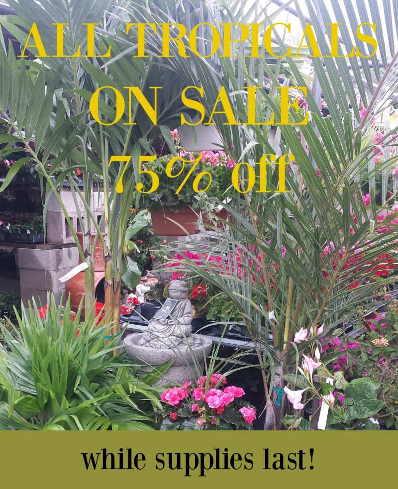 tropicals sale 2016