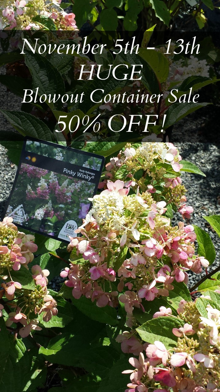 Container Shrubs November Sale Herbeins Lehigh Valley Pa