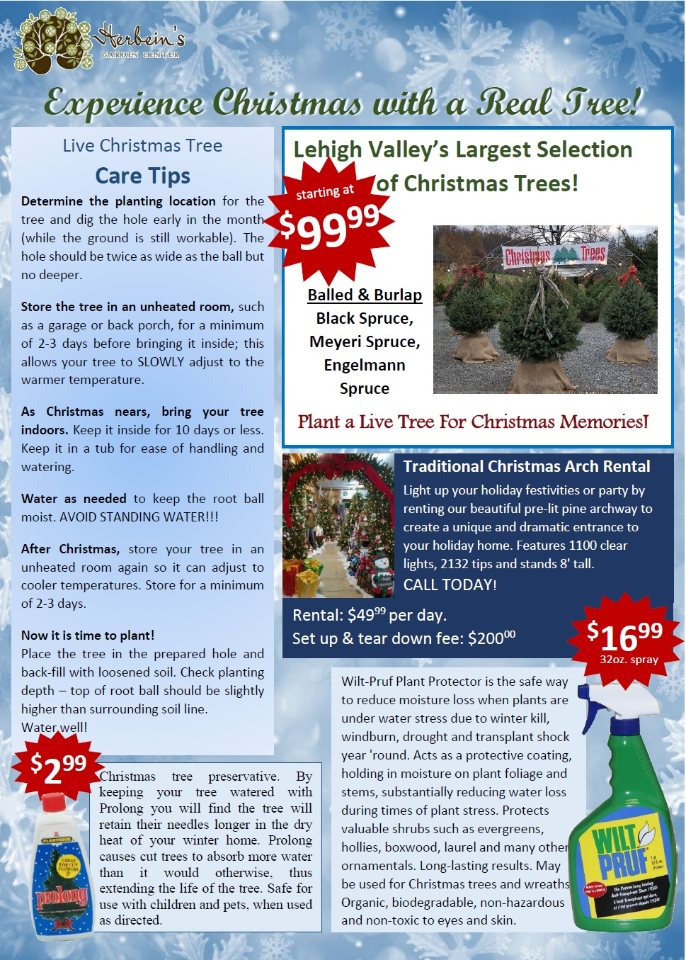 Christmas Tree How To Take Care Of