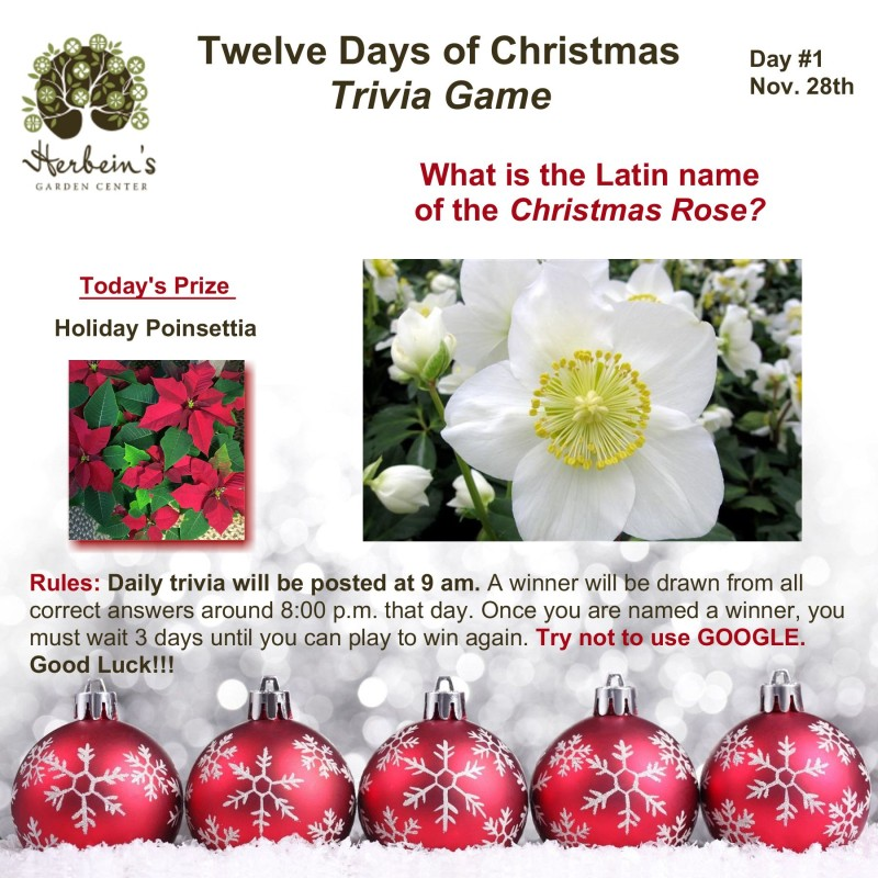 Herbeins Garden Center Tweleve Days of Christmas Trivia Day 1 Lehigh Valley Emmaus Pa