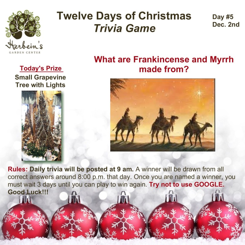 Herbeins Garden Twelve Days of Christmas Trivia Day 5