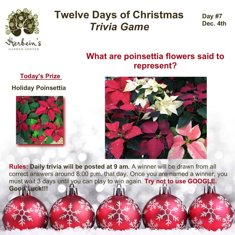 Herbeins Garden Twelve Days of Christmas Trivia Day 7