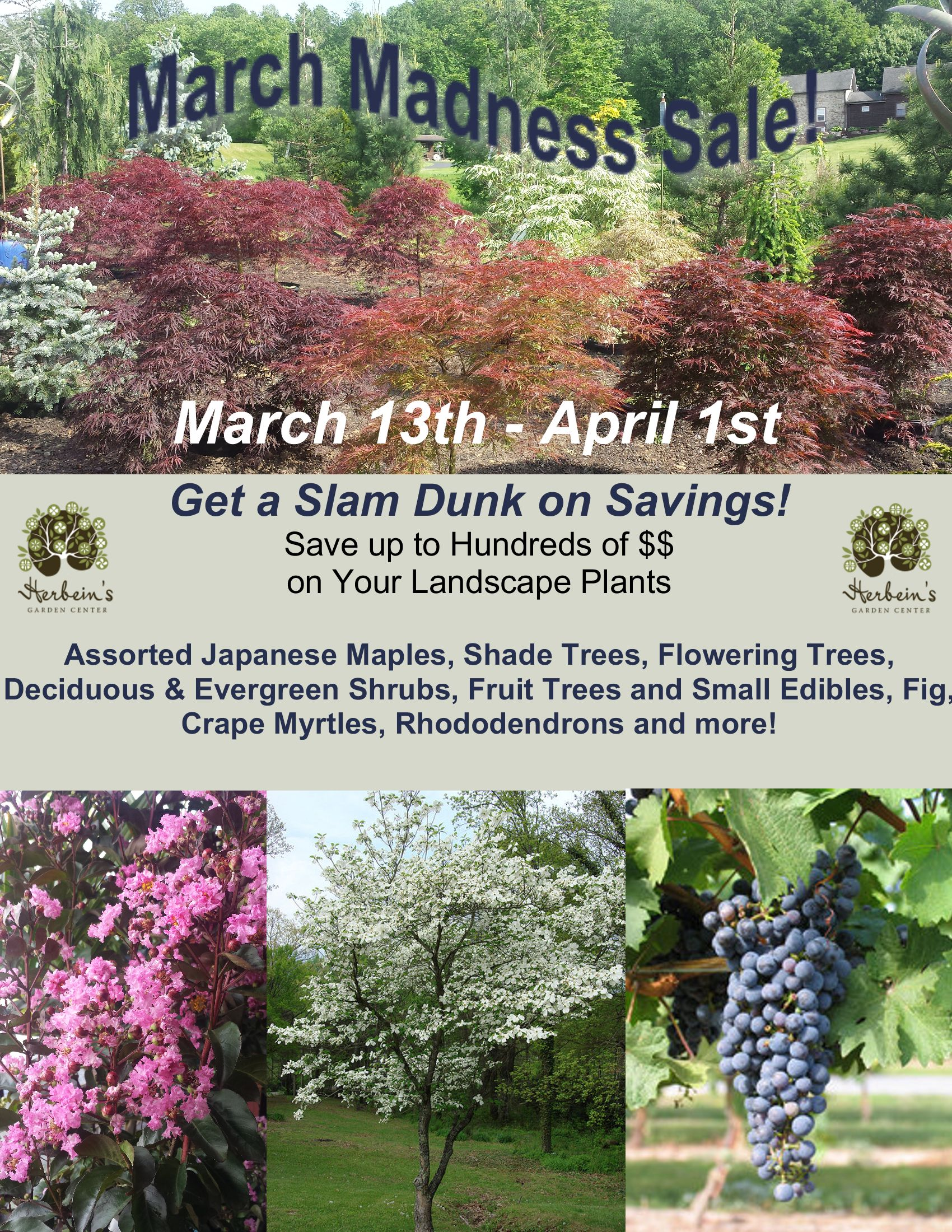 Herbeins Garden Center March Madness Sale Trees Shrubs Fruit