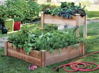 Gronomics Raised Garden Bed Vegetables Herbs Herbeins Garden Center Emmaus PA