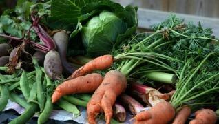 Tomatoes carrots Vegetables herbs Herbeins Garden Center Emmaus PA