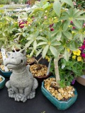 Bonsai Statuary Tropical Herbeins Garden Center Emmaus Pa