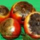 Blossom End Rot Tomatoes Herbeins Garden Center Emmaus Pa
