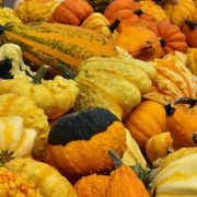 Fall Gourds Pumpkins Herbeins Garden Center Lehigh Valley Emmaus PA