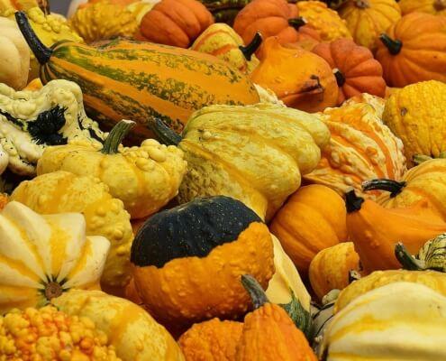 Fall Gourds Pumpkins Herbeins Garden Center Lehigh Valley Emmaus PA