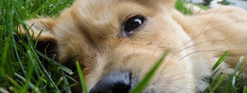 Espoma dog in lawn