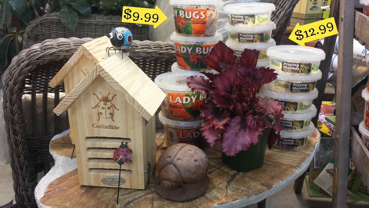 Herbeins Garden Center Ladybug & Mantids