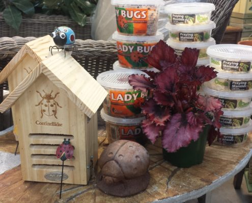 Ladybugs & Houses Herbeins Garden Center