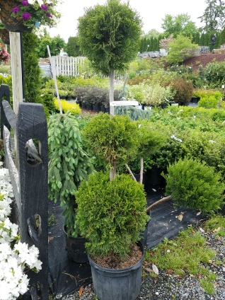 New 2018 Inventory Herbein's Garden Center
