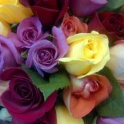 Rainbow of Roses at Herbein's Garden Center