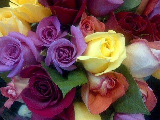 Rainbow of Roses at Herbein's Garden Center