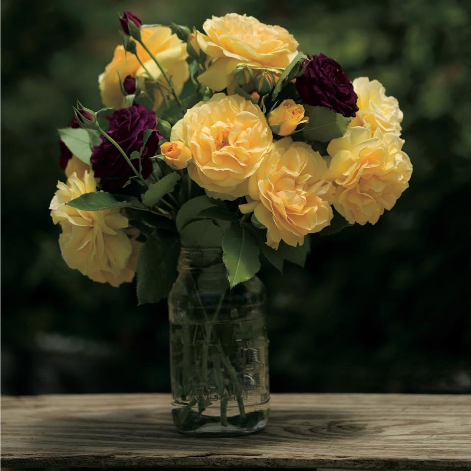 Roses in Vase Herbein's Garden Center