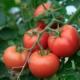 Tomatoes Herbeins Garden Center