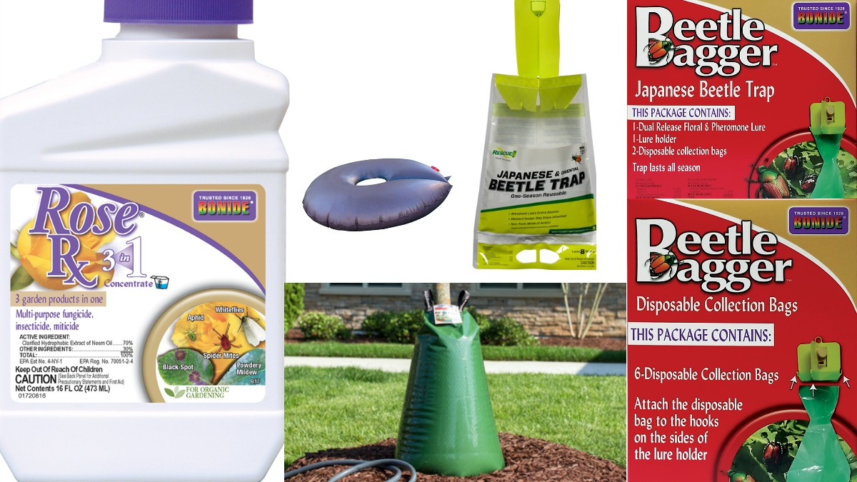 Summer Products Herbeins Garden Center