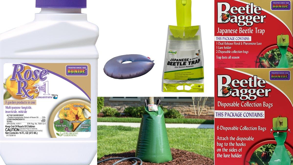 Summer Products Herbeins Garden Center
