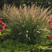 Ornamental grass Fall Herbeins Garden Center