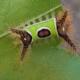 Saddleback Caterpillar Herbeins Garden Center