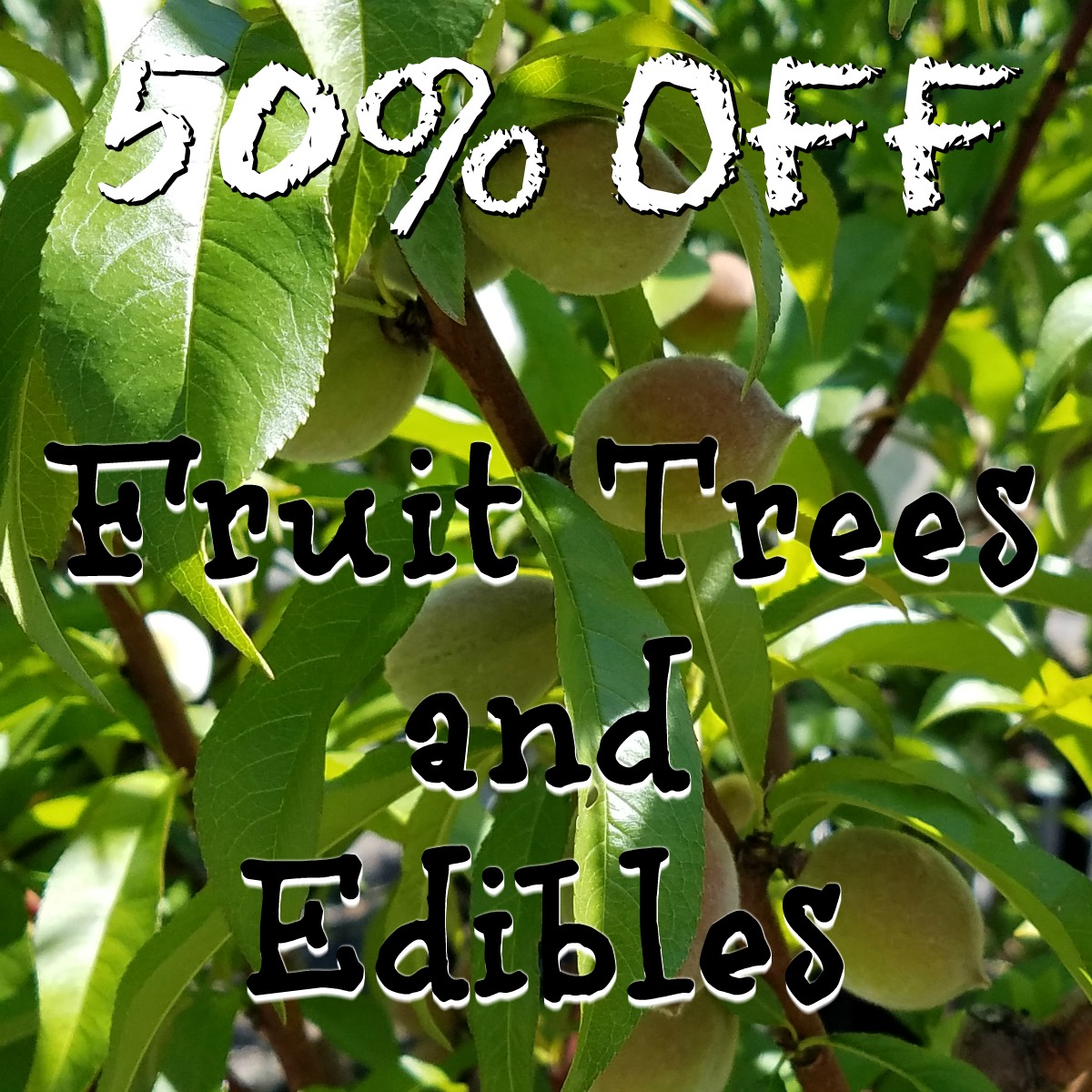Fruit Tree Sale Herbeins Garden Center