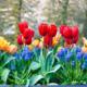 Spring Blooming Bulbs
