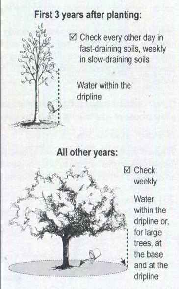 Herbeins Garden Center Tree Guide Watering