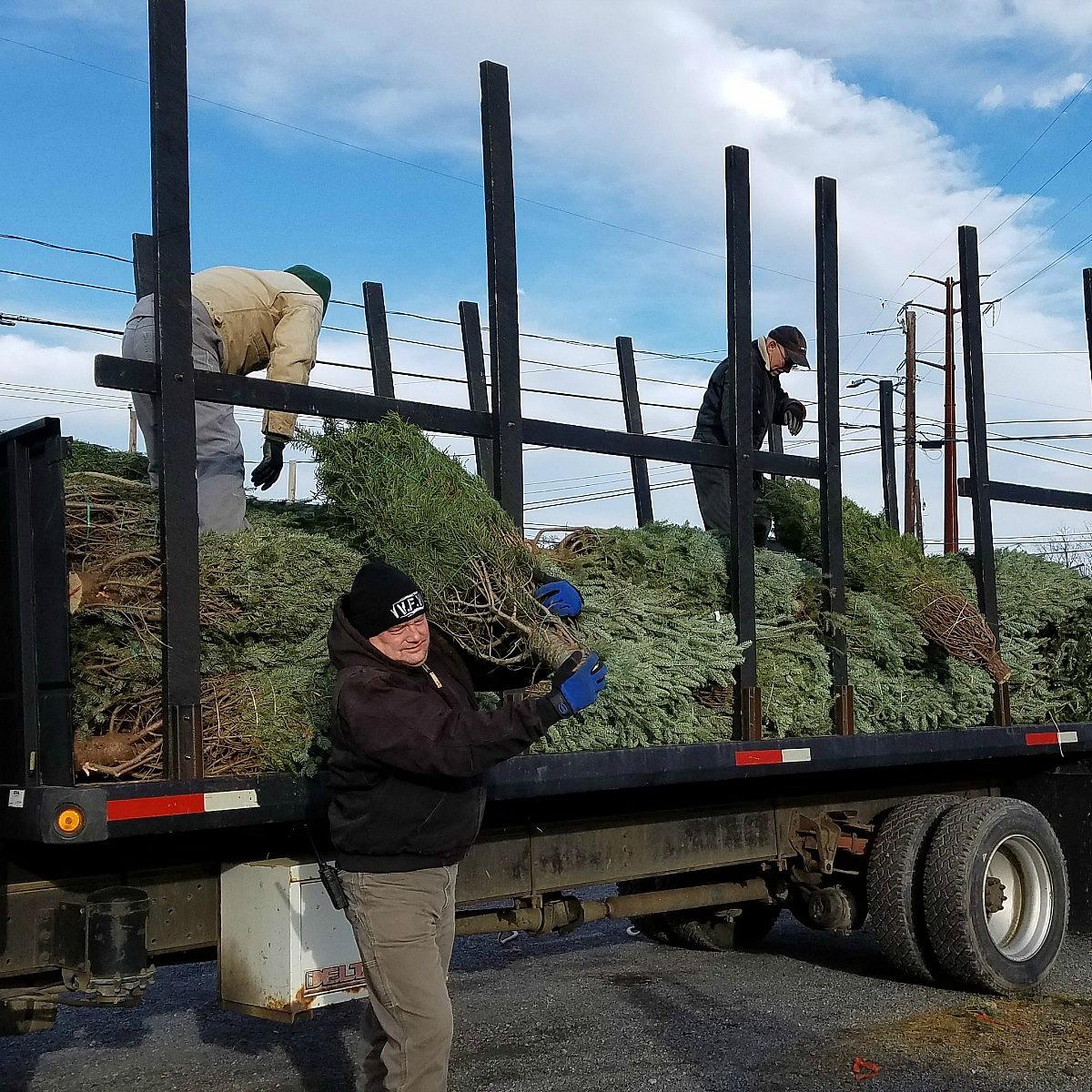 Herbeins Garden Center Christmas Tree Arrival 11.14.2018