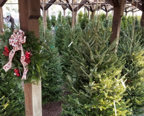 Herbein's Garden Center Christmas Trees 2018