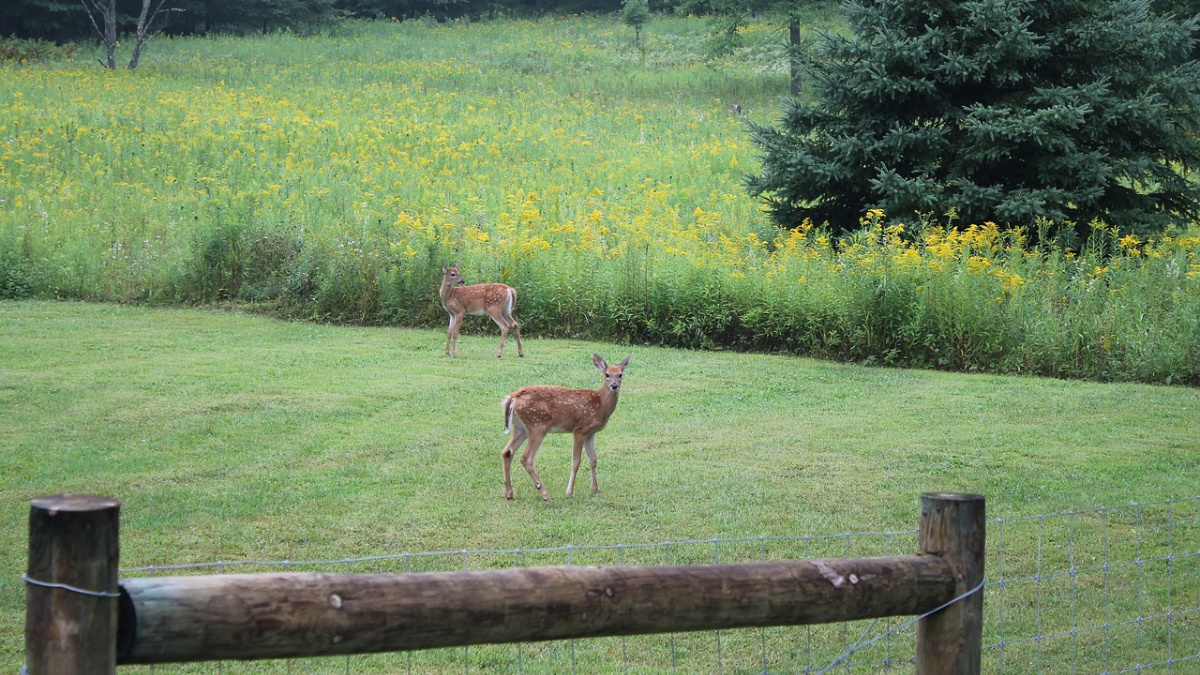 Deer Damage Herbeins Garden Center Emmaus Lehigh Valley