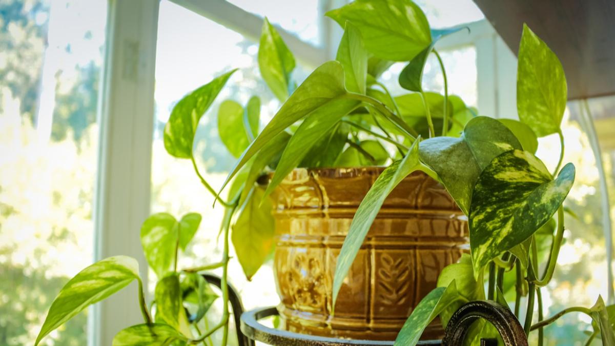 Sunny Houseplant Herbeins Garden Center Emmaus Lehigh Valley