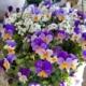 Spring Basket Herbeins Garden Center Emmaus Lehigh Valley