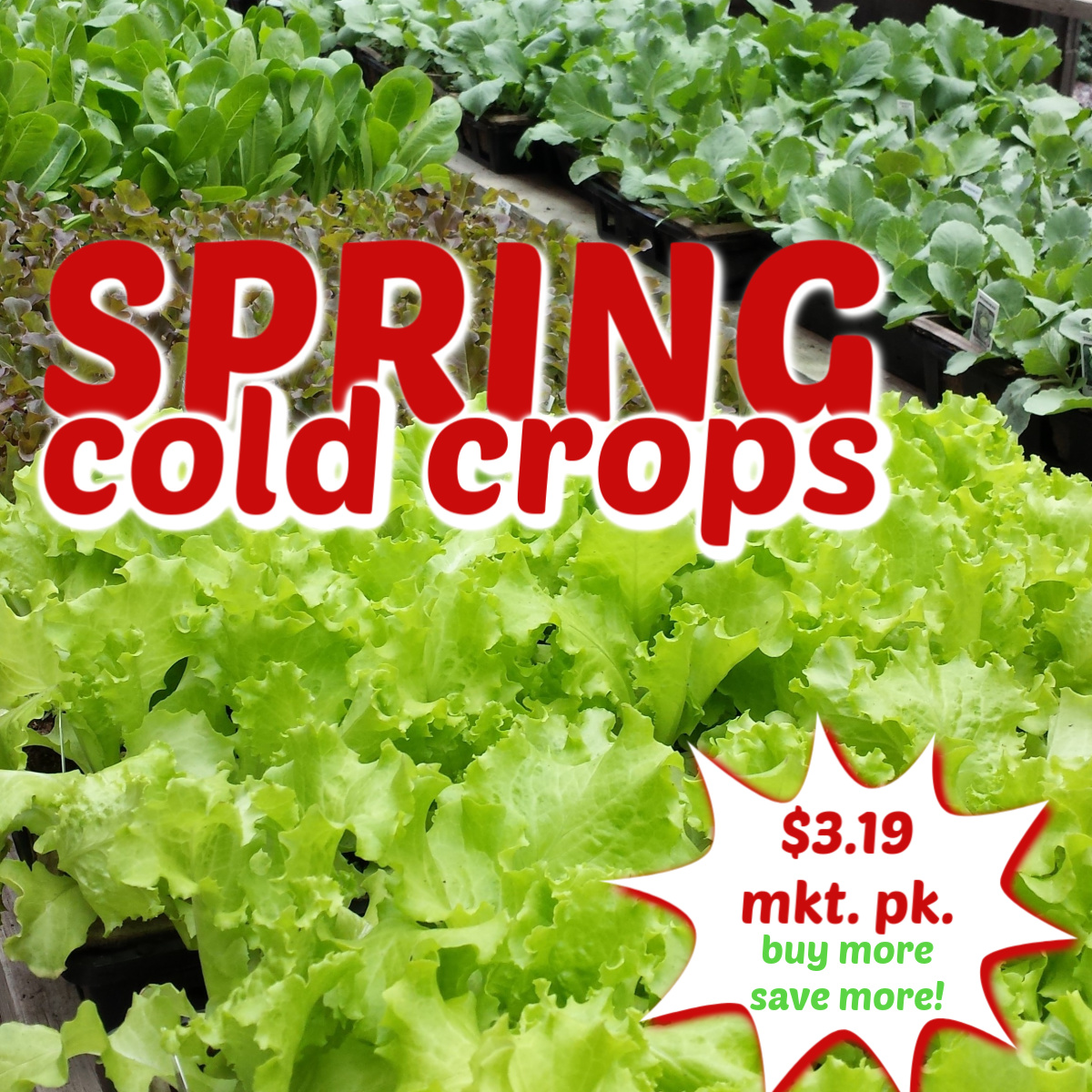 Spring Cold Crops Herbeins Garden Center Emmaus