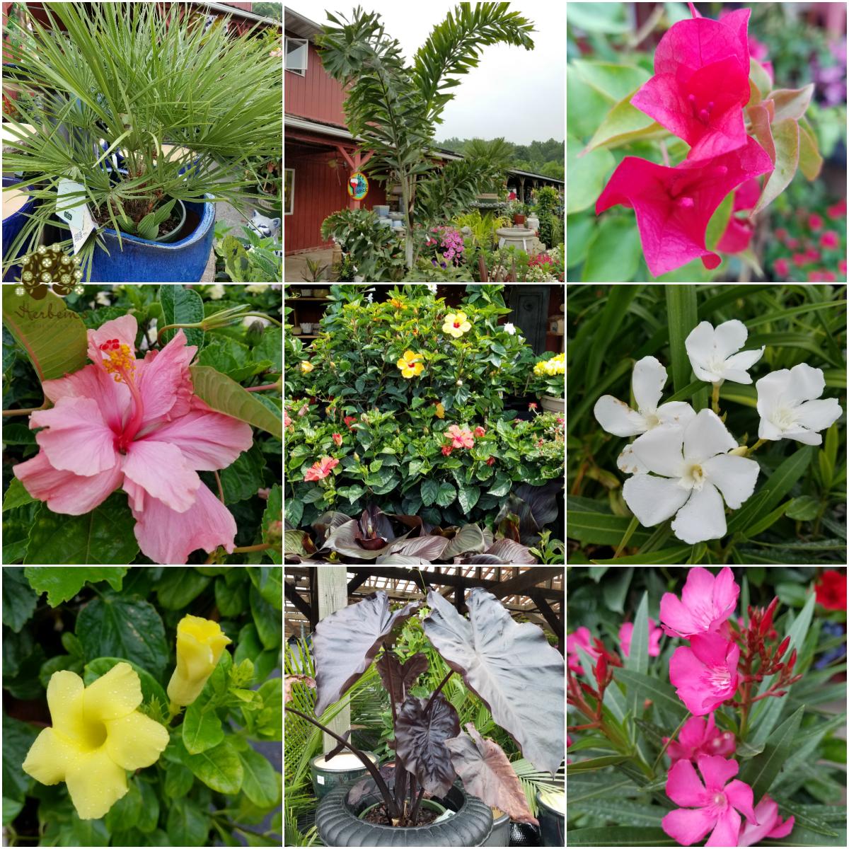 Selection of Tropicals Herbeins Garden Center Emmaus Lehigh Valley