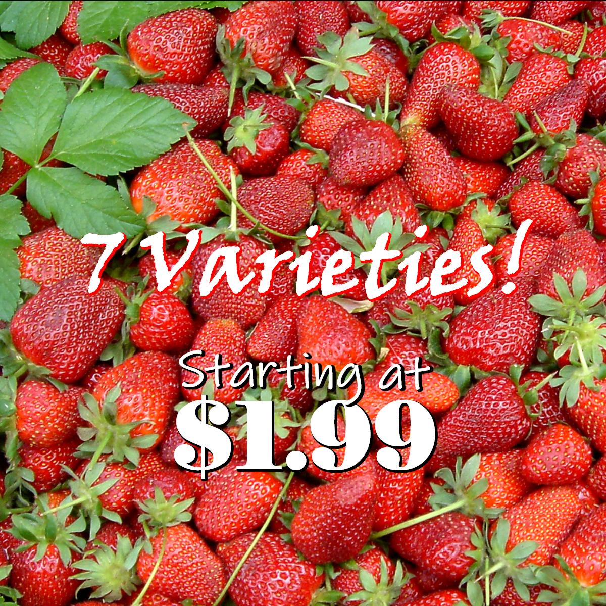 Strawberries Herbeins Garden Center